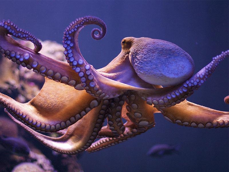 Лучшие развлечения на МайоркеАквариум Пальмы фото осьминог