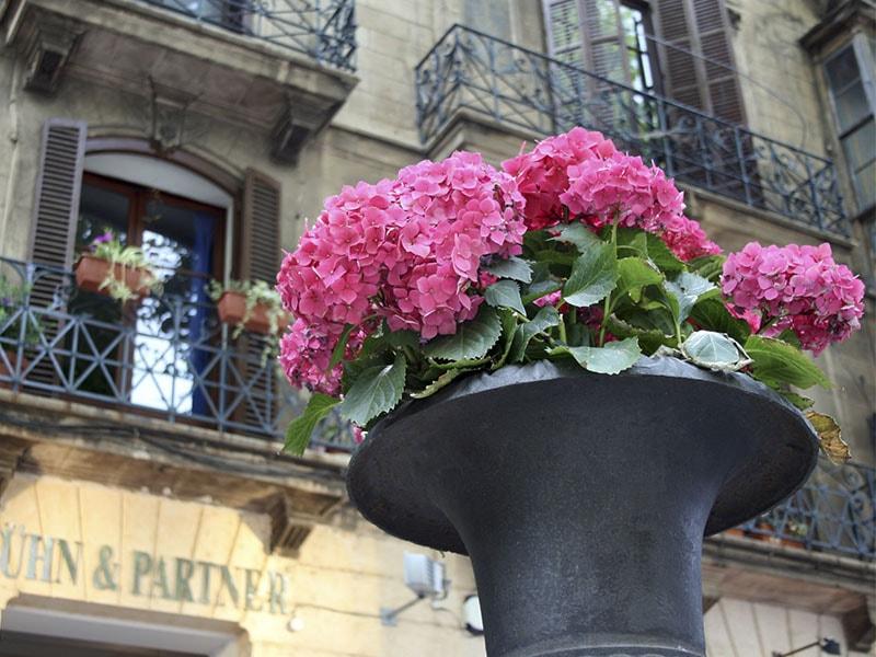 Пасео дель Борн Фото, экскурсия по Пальме де Майорке