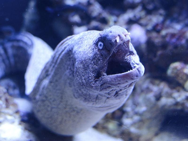 Фото Мурена, посещение аквариума Пальмы