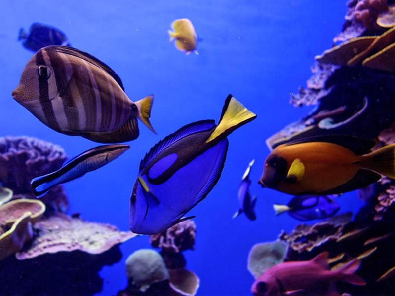Изображение Средиземноморский аквариум Пальмы на Майорке