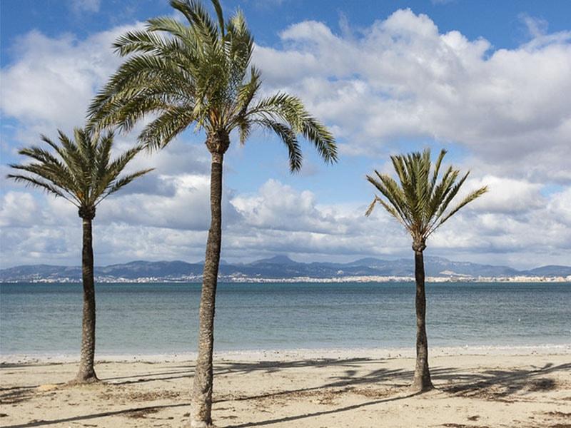 Фото длинный пляж Майорки Ареналь