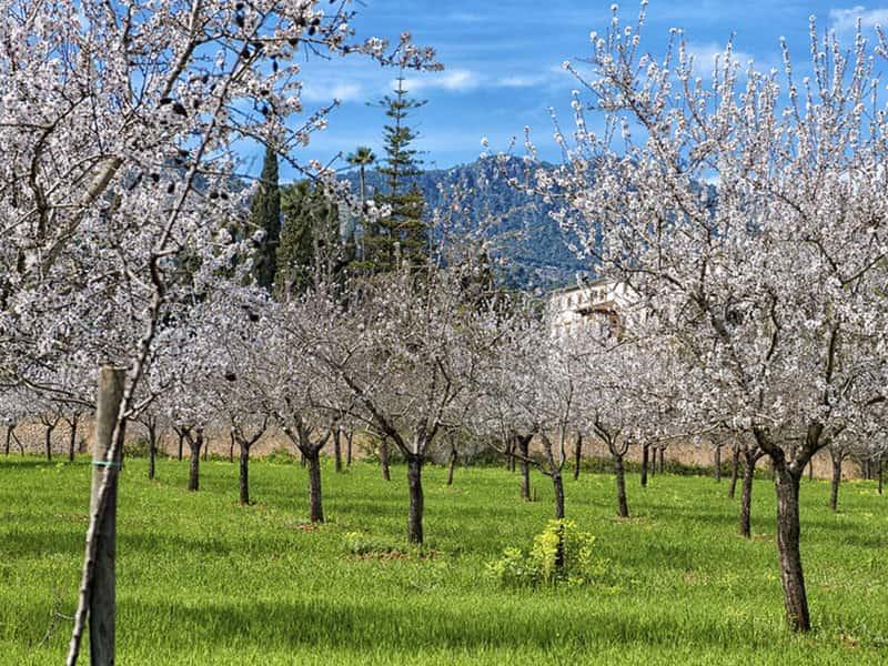Фото цветущие сады поместья, Майорка